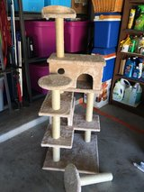 cat stand in Fort Hood, Texas