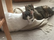 Mother and Son Kitties Need a New Home in Travis AFB, California