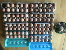 Farm Fresh free range eggs in Joliet, Illinois