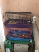 2 guinea pigs with supplies in Byron, Georgia