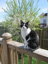 Cat to good home in Fort Campbell, Kentucky
