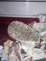 Girl hedge hog in Camp Lejeune, North Carolina