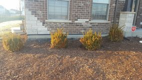 Small Bushes in Plainfield, Illinois