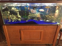 55 gal with cichlids in Lawton, Oklahoma