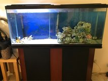 55 Gallon fish tank with stand and fish in Schofield Barracks, Hawaii