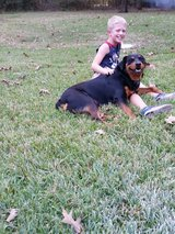 Rottweiler akc/moving out of state in Houston, Texas