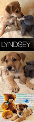 LYNDSEY in Plano, Texas