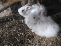 angora trio in DeRidder, Louisiana