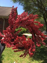 Holly berry wreath in Houston, Texas