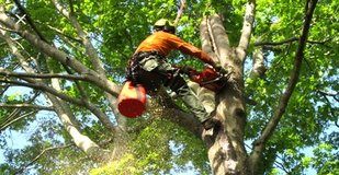 Chris bright's tree  services in Liberty, Texas