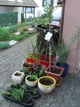 20 trees bushes flowers perennials w/planters in Ramstein, Germany