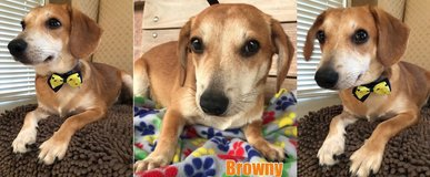 BROWNY in Plano, Texas