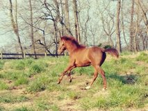 Horse boarding near clarksville and hopkinsville. Starting at 150 per month. Daily turn out with... in Fort Campbell, Kentucky