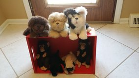 FurReal Friends - Kittens, Puppies, Monkeys in Naperville, Illinois