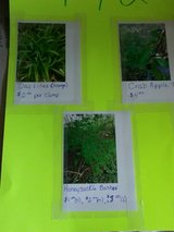 Plants for sale2 in Elizabethtown, Kentucky