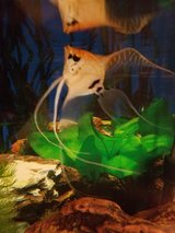 30g aquarium, stand and all supplies in Kingwood, Texas