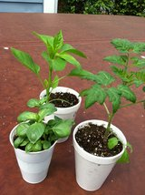 Garage Plant Sale - Homegrown Organic in Chicago, Illinois