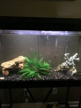 30 gallon aquarium-fish tank w/stand in Fort Campbell, Kentucky
