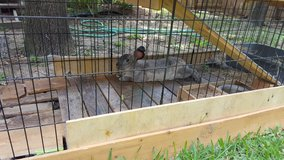 Free Rabbit in The Woodlands, Texas