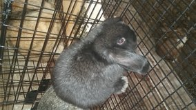 mini lop in Coldspring, Texas