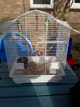 birds cage with toys and extras in Lakenheath, UK