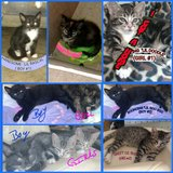 SWEET Babies NEED home ASAP!!!! in Warner Robins, Georgia