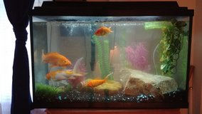 Fish tank, 2 Koi, 2 Goldfish, Large bag of food in Dover AFB, Delaware