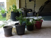 Plants with pots in DeRidder, Louisiana