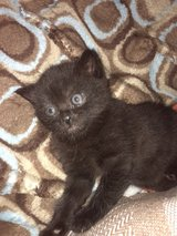 One little cuddle girl left for adoption in Baumholder, GE