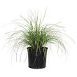 "3-gallon 10"" pots of MONKEY GRASS, evergreen hardy plants, great for landscaping borders/ground ... in Sugar Land, Texas"