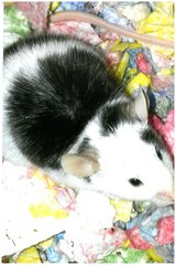 b-w and patches need great and forever homes. in Sugar Grove, Illinois