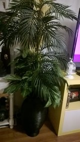 large faux plant in Fort Campbell, Kentucky