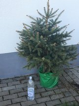 Christmas Tree (real) in Ramstein, Germany