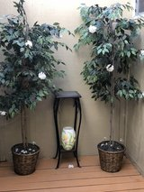 plants/table /vase in Vacaville, California