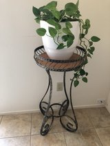 plant stand and plant in Vacaville, California