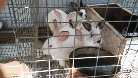 Rabbits New Zealand in Conroe, Texas
