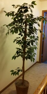 Reduced - Artificial Tree 5 ½ Feet in Westmont, Illinois