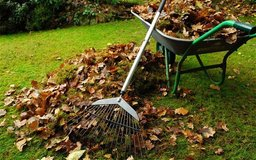 YARD & GARDEN WORK / TRASH & JUNK HAULING / PCS CLEANING / MOVING / PAINTING / ETC in Ramstein, Germany