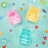 Scentsy  NEW summer collection scented wax in Fort Campbell, Kentucky