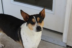Terrier mix to good home in Travis AFB, California