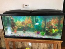Complete 55gal Aquarium Set Up in Tacoma, Washington