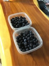 Crop of local blueberries, no pesticides used in Beaufort, South Carolina