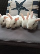 very cute small rabbits in Ramstein, Germany