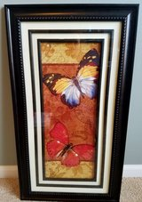 Picture butterflies in Naperville, Illinois