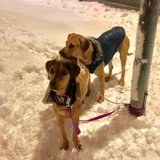 Two Dogs in Baumholder, GE