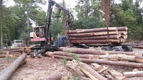 We buy timber cash paid in Cleveland, Texas