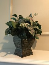 """Tin Ivy & 3 Calla""""s in The Woodlands, Texas"""
