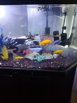 Free tropical fish in Temecula, California