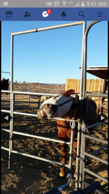 Farrier work in Yucca Valley, California