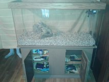 75 gallon aquarium with stand and all needed to start. in Nellis AFB, Nevada